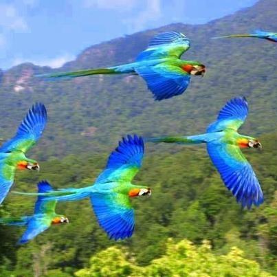 072615 macaws