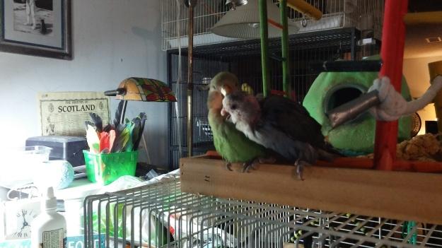 tek grooming fin