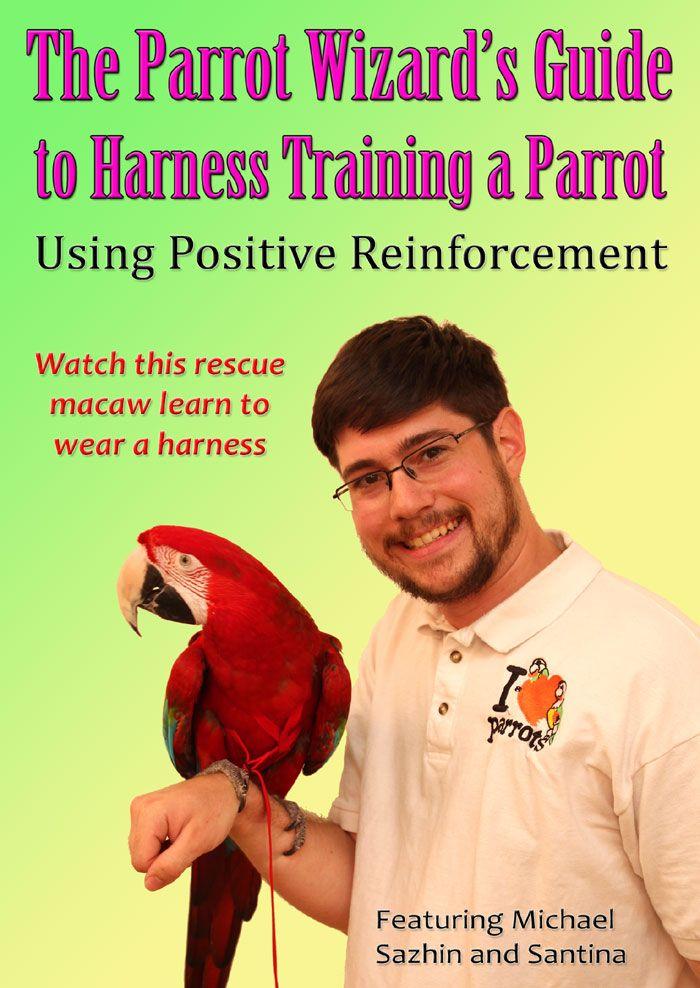 112215 parrot wizard