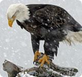120615 eagle