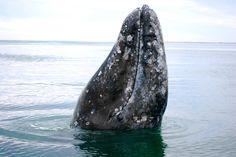 120615 whale