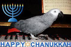 121015 Hanukkah