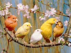 122415 canary