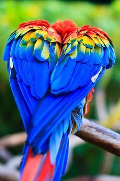 122415 macaw