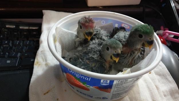 Three baby lovies