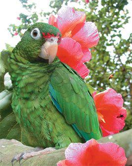 013116 pr parrot
