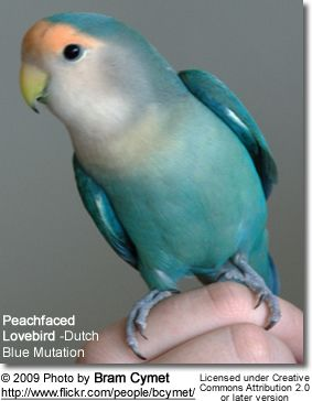 022816 dutch blue