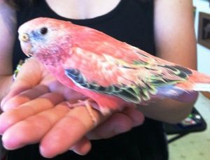 030616 bird in hand
