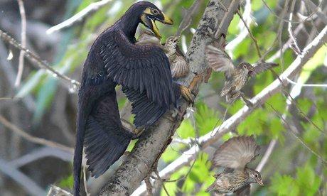 031016 mama bird