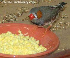 031316 egg food