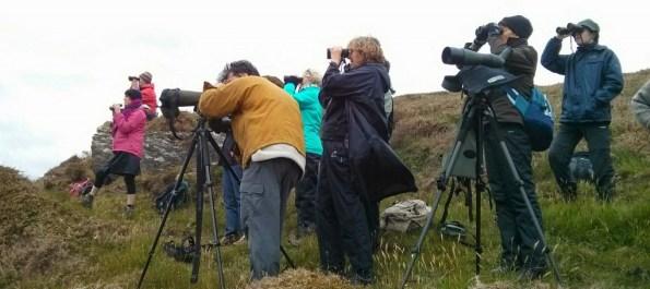 031716 irish birders