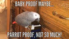 032416 parrot proof