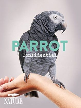 041016 parrot con