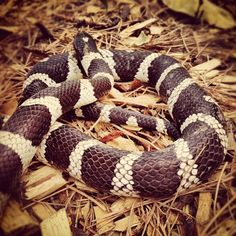 041416 snake