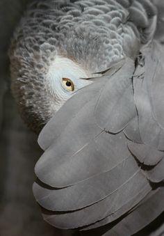 060516 shy grey
