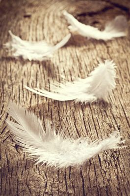 060916 white feathers