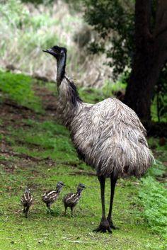 061916 emu