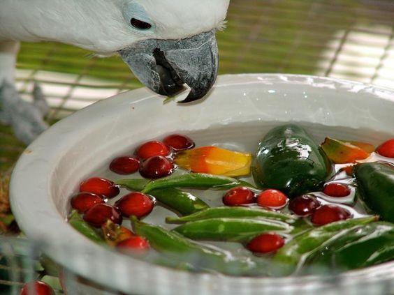 063016 fresh food in water