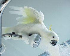 063016 too bathing