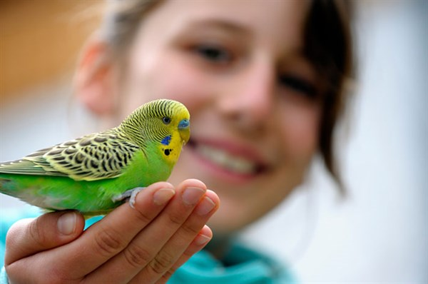 072816 a budgie