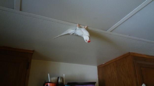 Wraith on the ceiling