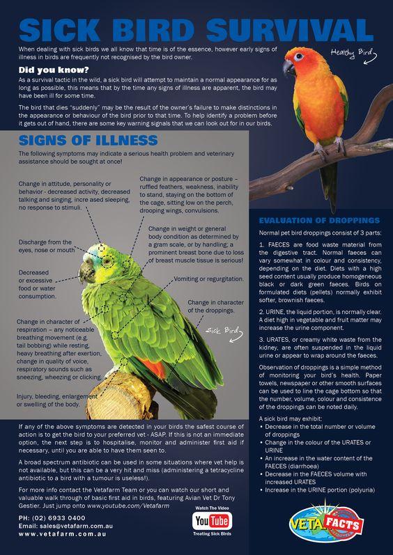 091516-sick-bird-guide