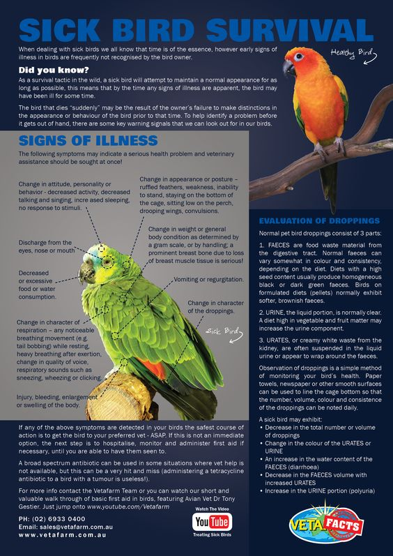 091516-sick-bird-guide