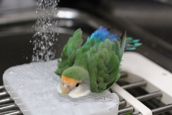 091816-lovebird-shower