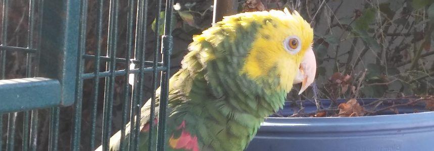In Loco Parrotus