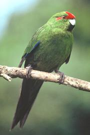 103016-anothr-parrot