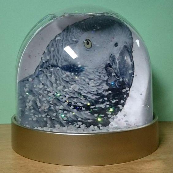 112016-better-snow-globe
