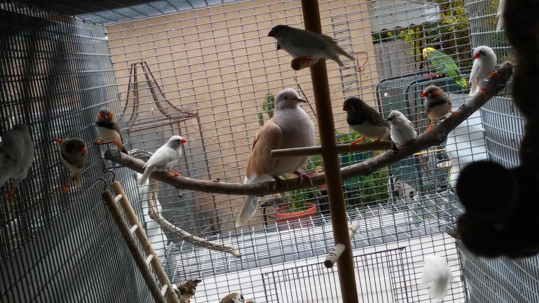 finch-chicks-from-inside