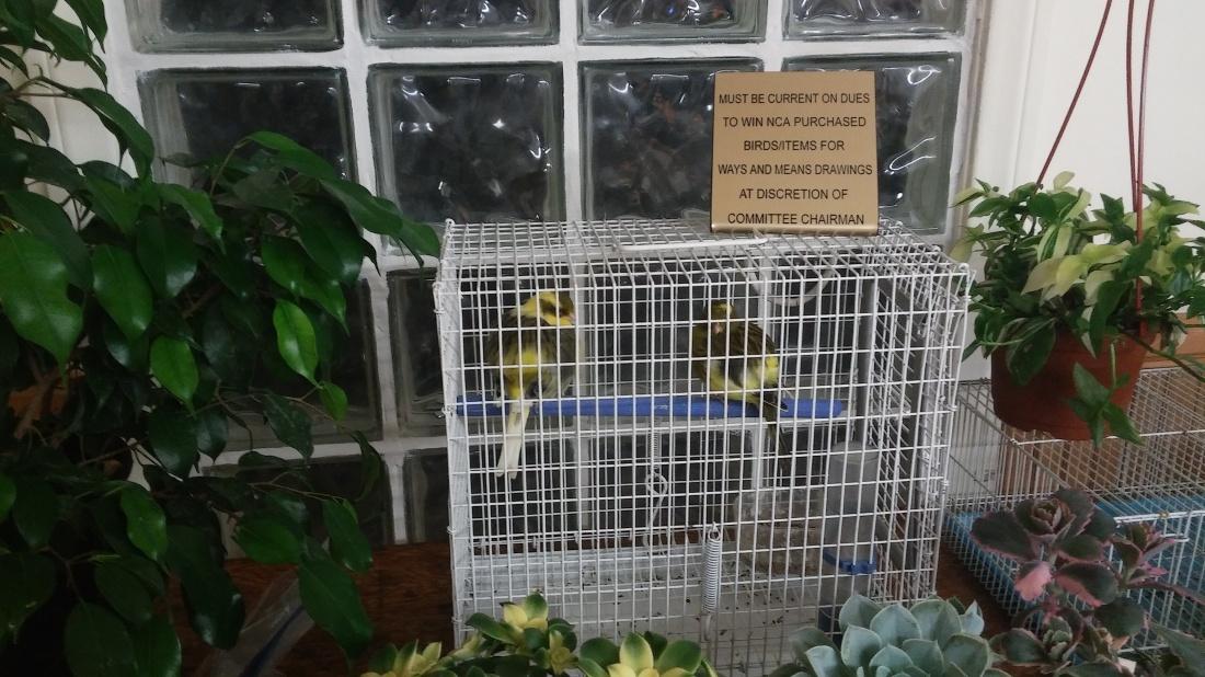 border-canaries