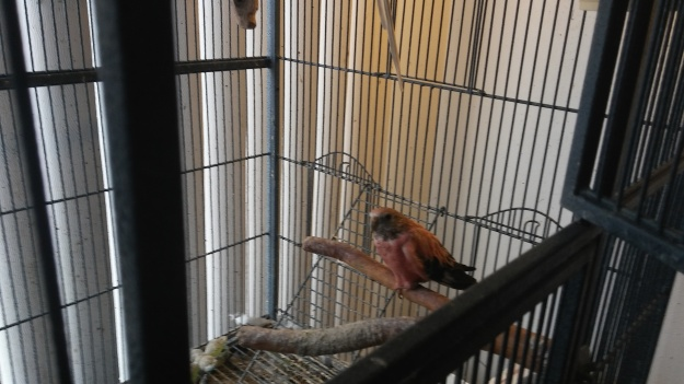ethel-in-the-cage