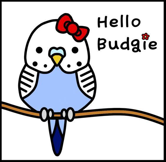040217 hello budgie