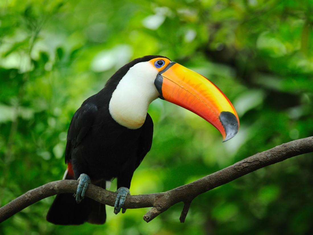 042317 a toucan