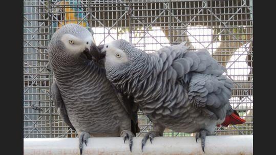 052817 grays