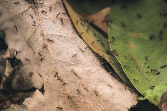 072317 ants