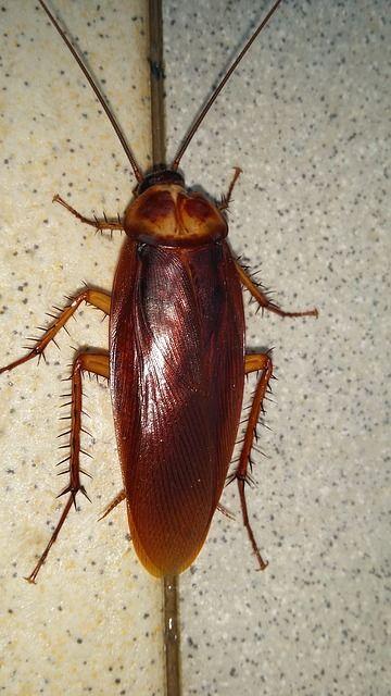 072317 roach