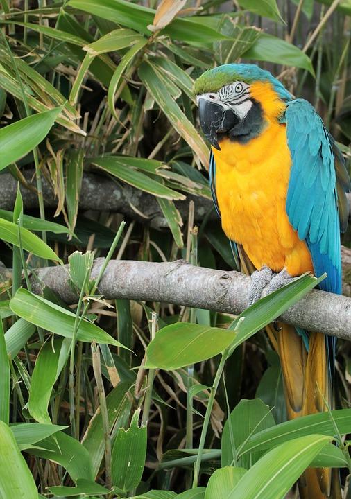 073017 macaw