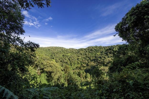 073017 rainforest