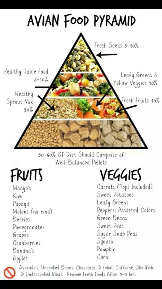 080617 bird food pyramid