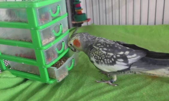 080617 foraging toy