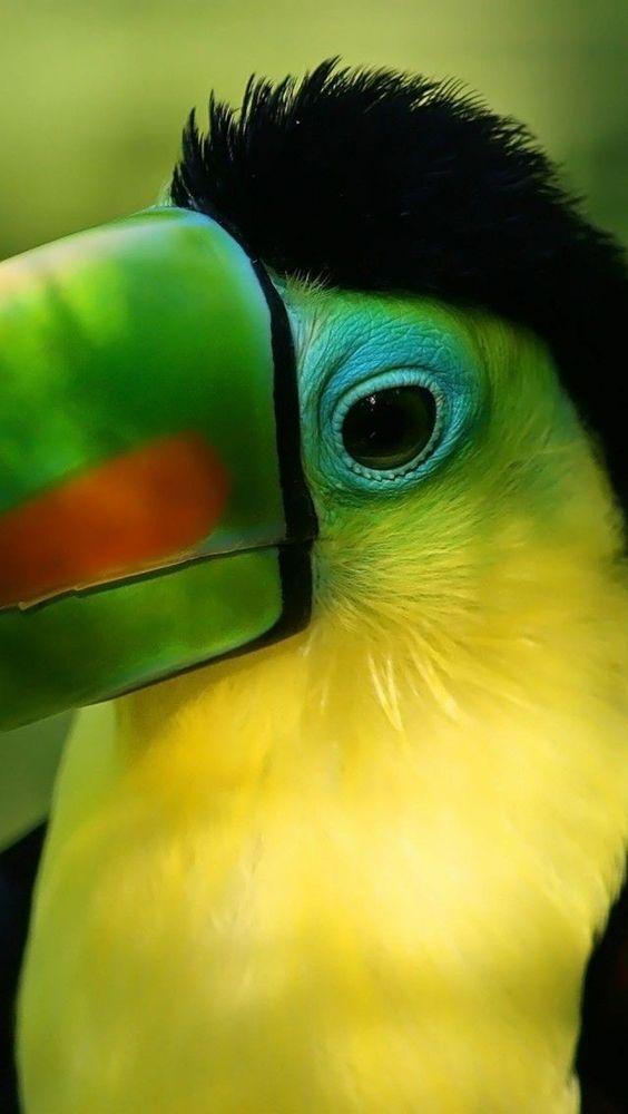 081317 toucan