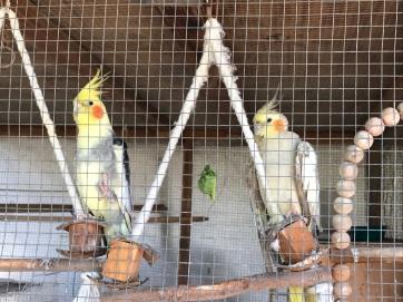 m&P in new aviary