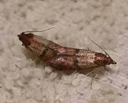 100117 moths