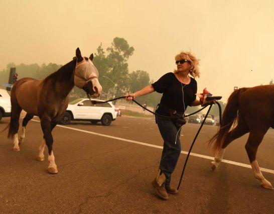 101517 horses evacuate