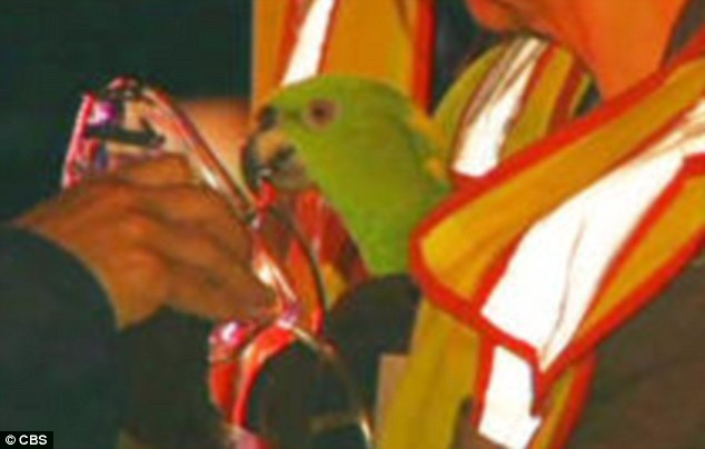 101517 parrot rescued from fire