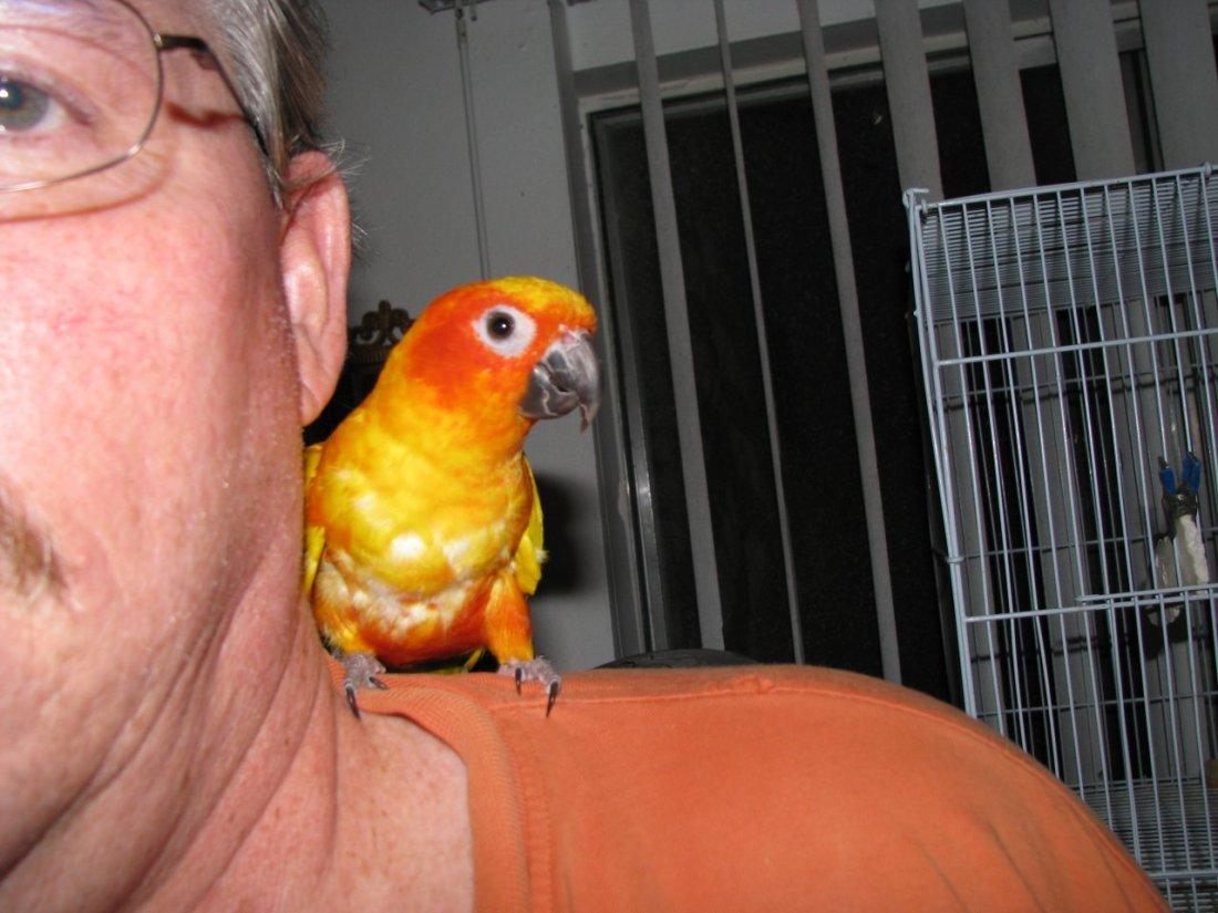 Zazu on Mike's shoulder
