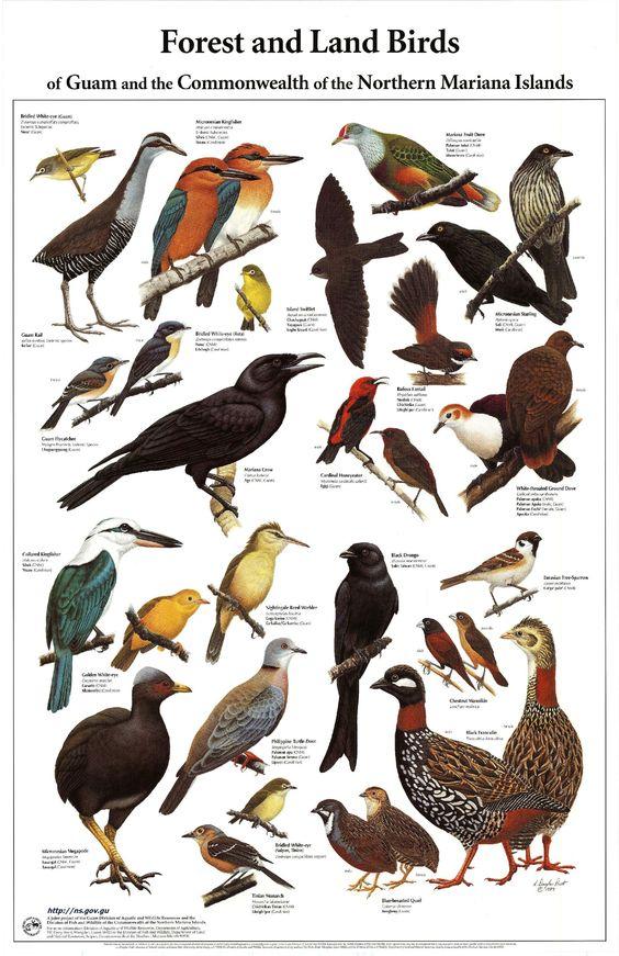 032518 all the birds